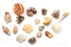 Seashell collection Royalty Free Stock Photography