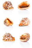 Seashell collection. Collection of sea shell on a white background Stock Photo