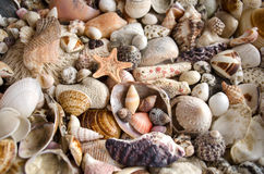 Seashell collection stock photography