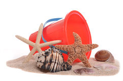 Free Seashell Collection Royalty Free Stock Image - 42722376