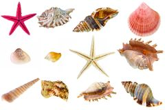 Seashell collection Stock Images