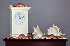 Seashell collection with clock on shelf Royalty Free Stock Photography
