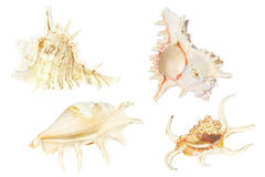 Seashell Stock Images