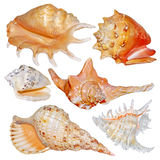 Seashell collection isolated on white Royalty Free Stock Image