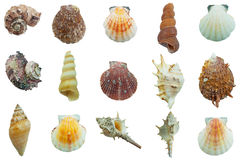 Seashell collection isolated on white background Stock Image