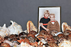 Seashell collection and photo Stock Image