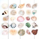 Beautiful Seashell Collection royalty free stock photo