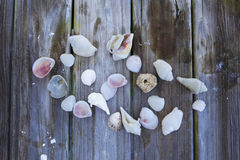 Seashell Collection on Rustic Wood Royalty Free Stock Image