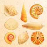 Seashell collection on sand background Royalty Free Stock Images