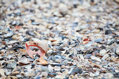Seashell collection  Royalty Free Stock Images