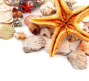 Seashell collection on white or isolated Royalty Free Stock Photos