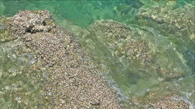Seashell collony on the rock stock footage