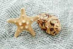 Seashell coloreado (estrellas de mar y concha de peregrino) Imagen de archivo libre de regalías