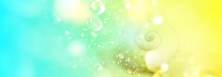 Seashell on colorful background. Summer wallpaper banner for web design. Waves, Water drop and bokeh lights. A small sea slug under water. Tropical Royalty Free Stock Image