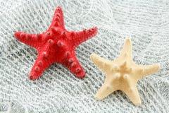Seashell colorido (Starfish) em uma rede de pesca Fotos de Stock Royalty Free