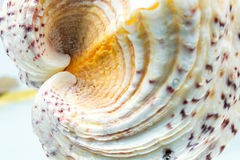 Seashell colors and texture Stock Photos