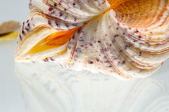 Seashell colors and texture Stock Photo