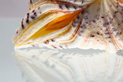 Seashell colors and texture Stock Images