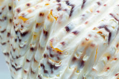 Seashell colors and texture Royalty Free Stock Photography