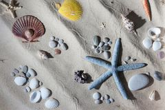 Seashell composition Stock Photos