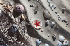 Seashell composition Royalty Free Stock Photos