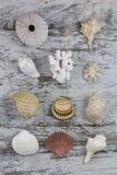 Seashell composition Stock Photo