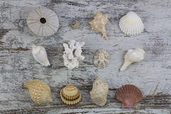 Seashell composition Royalty Free Stock Photography