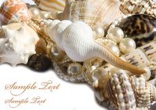 Seashell con le perle Fotografia Stock Libera da Diritti