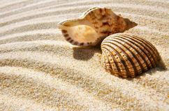 Seashell and Conch Stock Images