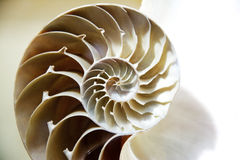 Seashell cut open Stock Photos