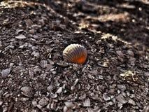 Seashell czarny dramat Fotografia Royalty Free
