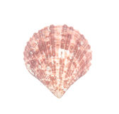 Seashell d'isolement sur le blanc image stock