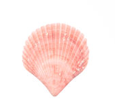 Seashell d'isolement sur le blanc photos stock