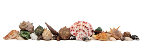 Seashell d'isolement sur le fond blanc Photo libre de droits