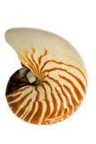 Seashell d'isolement sur le fond blanc photo stock