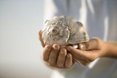 Seashell da terra arrendada do menino. Fotografia de Stock Royalty Free