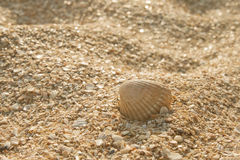 Seashell dans le sable images stock