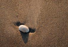 Seashell dans le sable Photo libre de droits