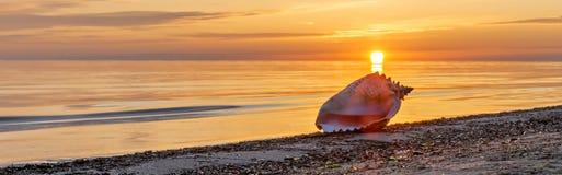 Seashell at dawn. The photo was taken on sandy beach of the Baltic Sea, Jurmala, Latvia Stock Photo