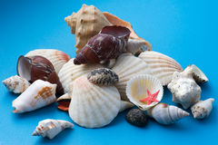 Seashell de décor sur la fin de bleu vers le haut image stock