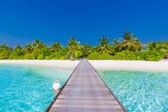 Seashell de feston sur le rose Bel horizontal de plage Scène tropicale de nature Palmiers et ciel bleu Vacances d'été et concept  Photographie stock