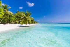 Seashell de feston sur le rose Bel horizontal de plage Scène tropicale de nature Palmiers et ciel bleu Vacances d'été et concept  Image stock