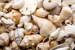 seashell de fond image stock