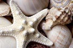 seashell de fond photos libres de droits