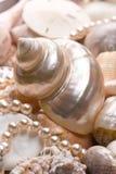 seashell de fond photographie stock libre de droits