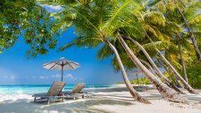 Seashell de la concha de peregrino en color de rosa Paisaje hermoso de la playa Escena tropical de la naturaleza Palmeras y cielo imagen de archivo