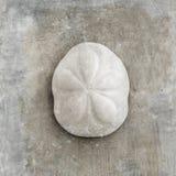 Seashell de la galleta de mar imagen de archivo libre de regalías