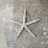 Seashell de las estrellas de mar imágenes de archivo libres de regalías