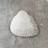 Seashell de palourde images stock