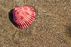 Seashell de plage Photos stock